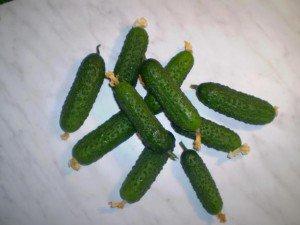 Особенности сорта, высадка и урожайность огурца Меренга