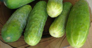 early varieties of cucumbers
