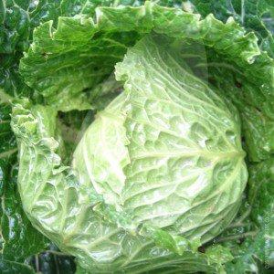Посев капусты. Выращивание рассады