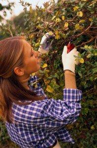 Обрезка плодовых деревьев и кустарников и несколько секретов садоводам-огородникам