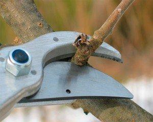 Правила обрезки деревьев весной
