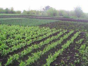 Сад и огород для ленивых. Советы и правила