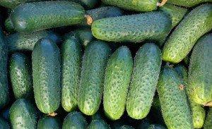 Огурцы, выращивание и уход