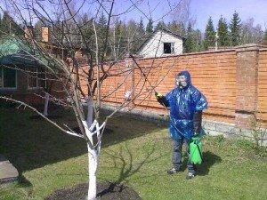Как проводить опрыскивание сада весной