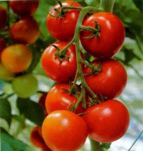 О пользе и вреде помидоров