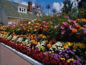 Сад и огород, цветы на удобренной почве