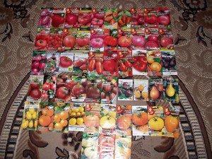 Удачная посадка помидор в теплице