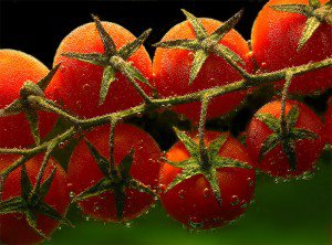 Выращиваем высокорослые помидоры в теплице