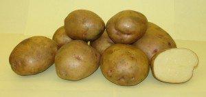 Картофель, его посадка и уход