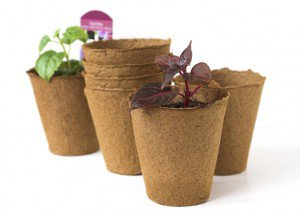 Выращивание рассады в торфяных горшочках