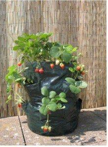 Зарабатываем хорошо и с удовольствием: выращивание клубники в мешках!
